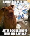 dog TP.png