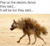 pee on a fence.jpg